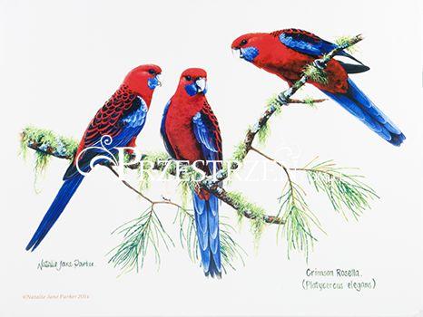 DUŻA PODKŁADKA POLIPROPYLENOWA NA STÓŁ - Ptaki - Papugi rosella