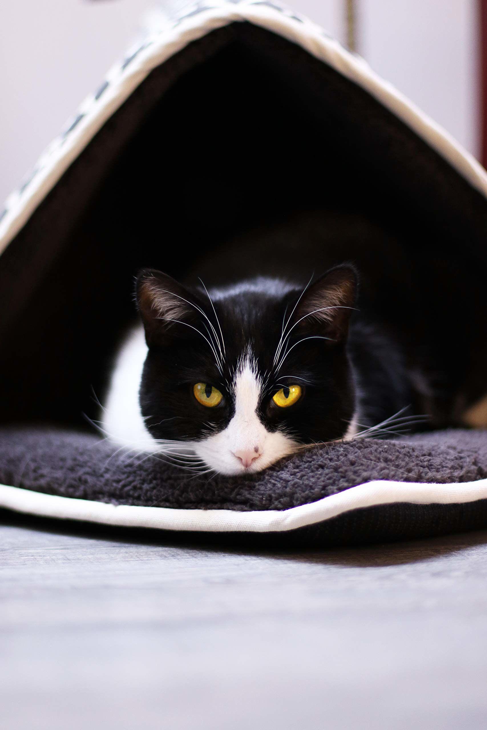 Aime Namiot składany dla kotów/małych psów, kosz do spania, zabawka, pompon, materiał bawełniany, futro owcze, komfort rozmiar S, średnica 40 x 40 cm