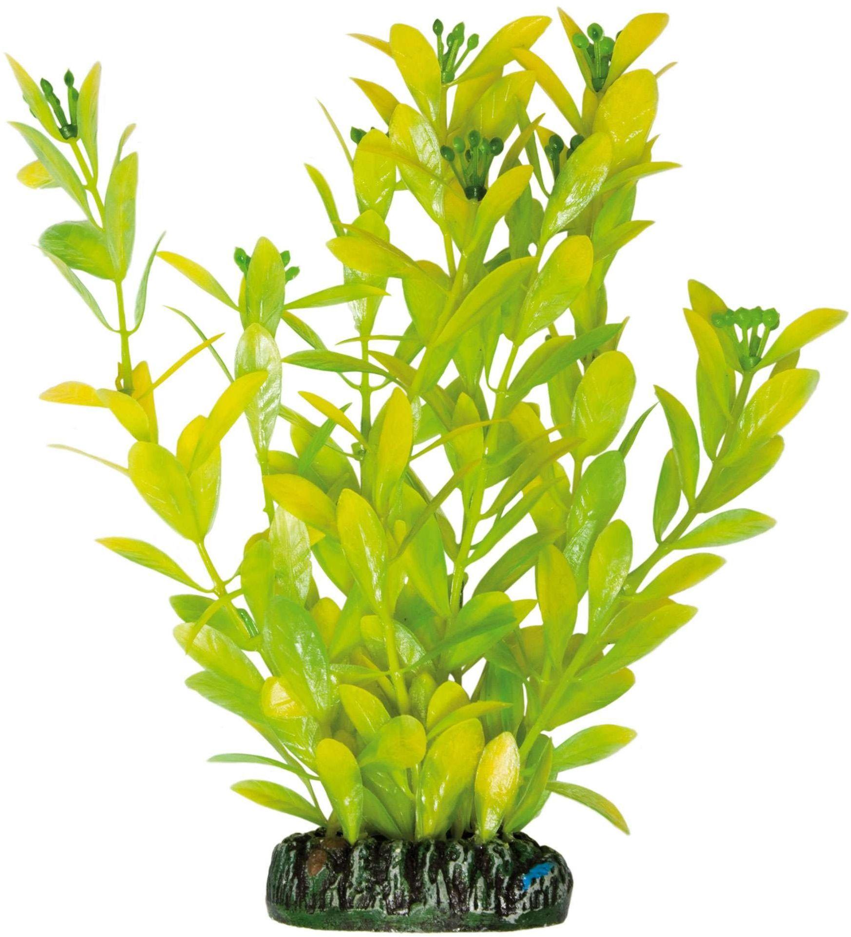 ICA AP1021 Hygrophila Polysperma od roślin wodnych, tworzywo sztuczne
