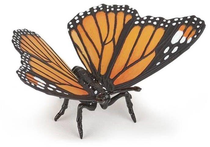 Motyl - PAPO