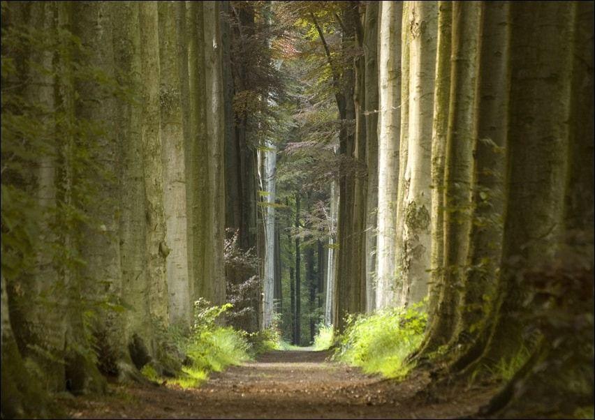 Las, wiosenny poranek - plakat wymiar do wyboru: 70x50 cm