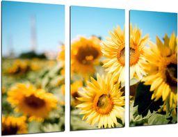 Obraz ścienny - pole żółte słoneczniki, 97 x 62 cm, druk drewna - format XXL - druk artystyczny, ref.26297