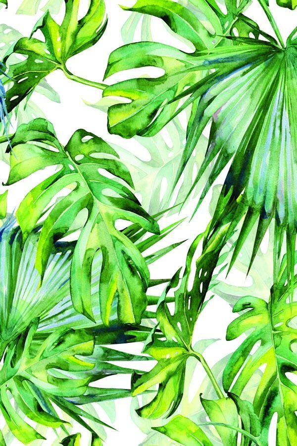 Tropikalne liście - plakat wymiar do wyboru: 50x70 cm