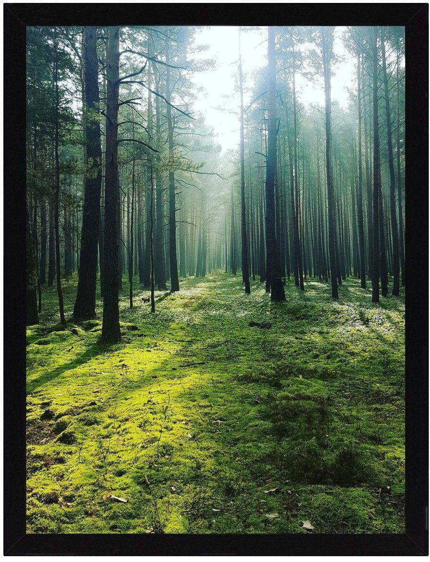Obraz Green Forest 30x40cm, 30  40 cm