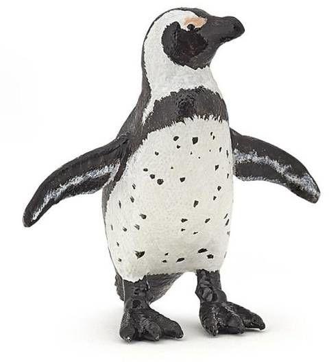 Pingwin afrykański - PAPO