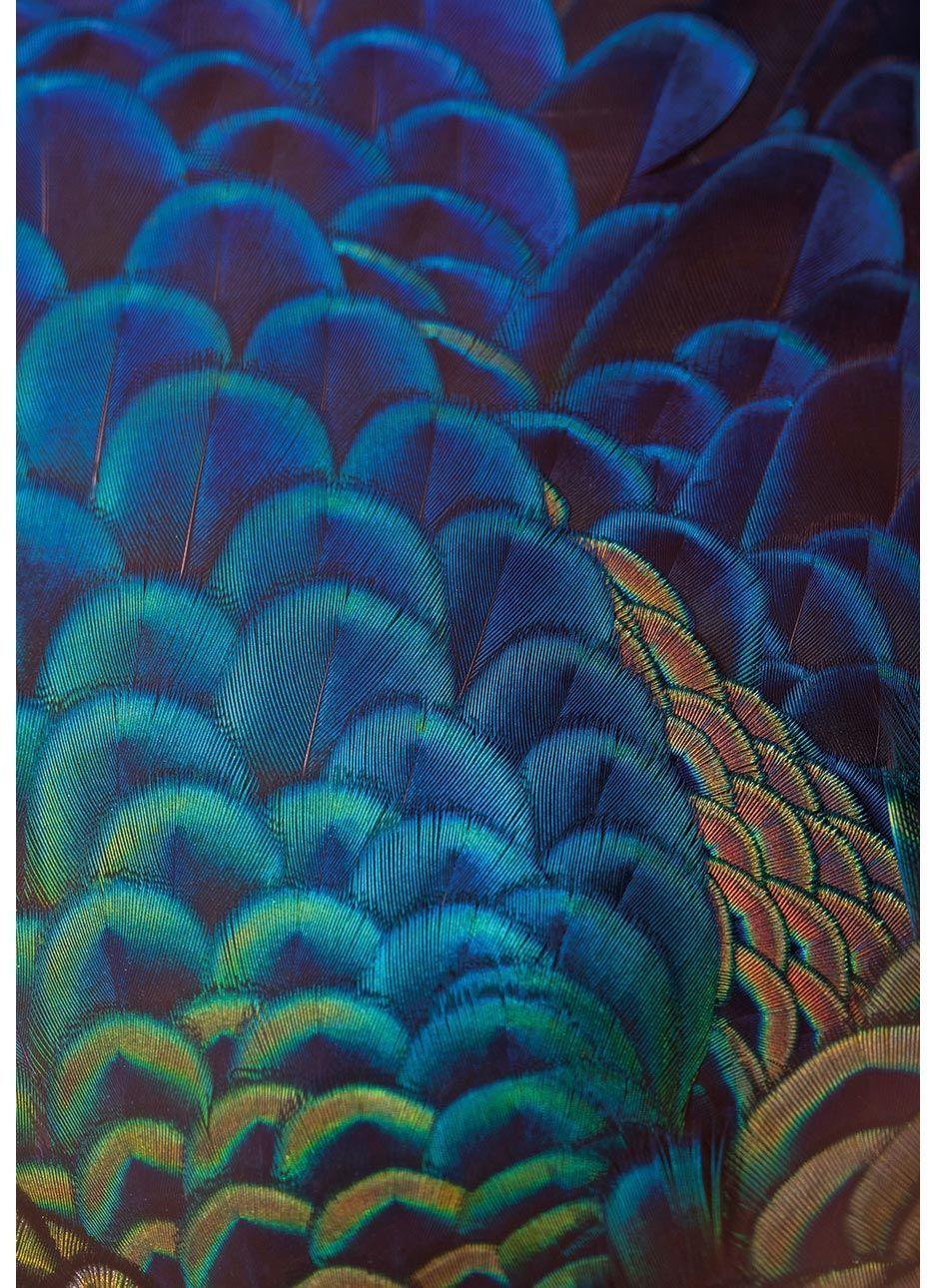Obraz na płótnie Multicolor Feathers