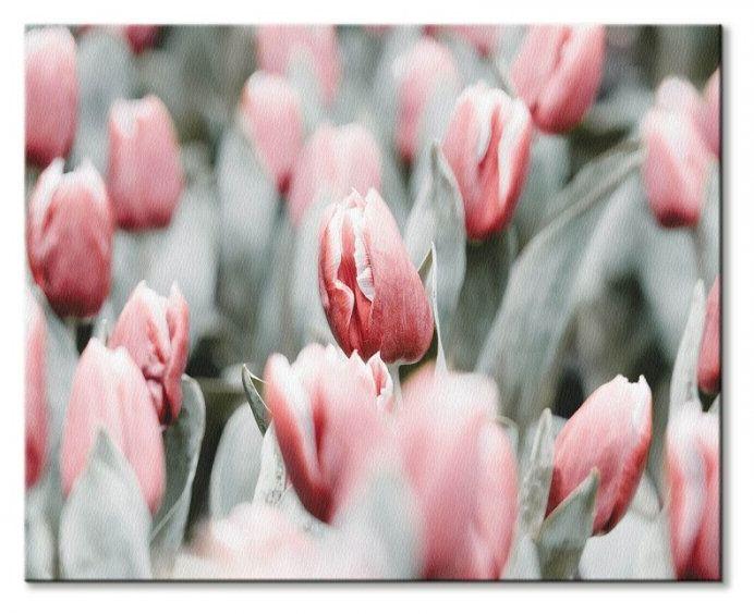 Różowe tulipany - obraz na płótnie