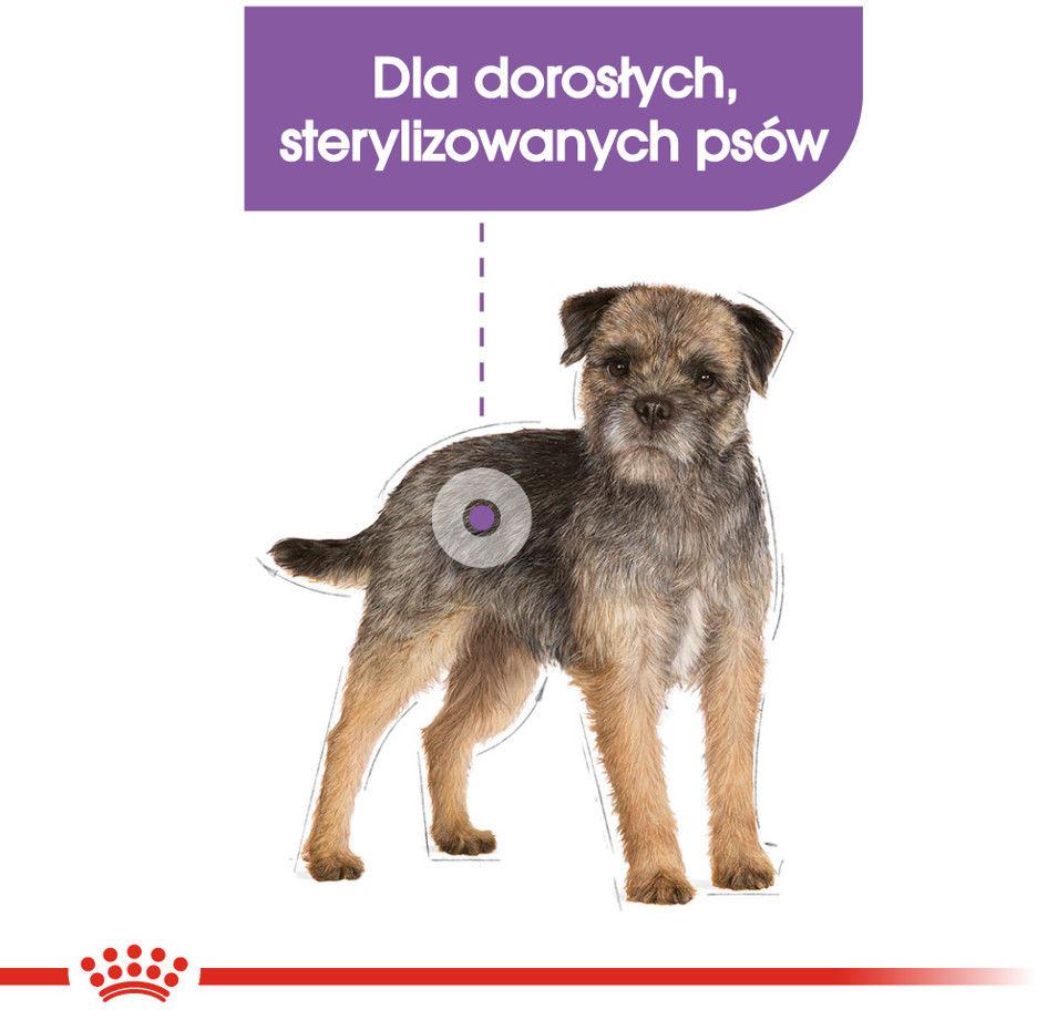 ROYAL CANIN CCN Mini Sterilised 1kg karma sucha dla psów dorosłych, ras małych, sterylizowanych