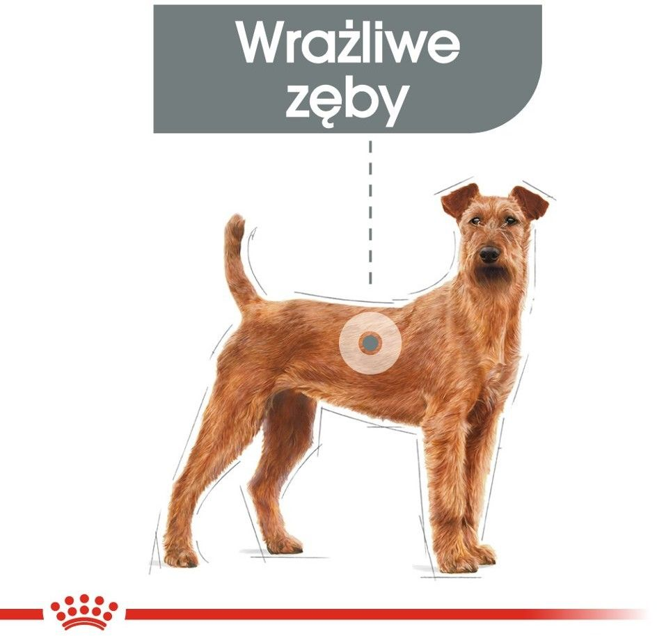 ROYAL CANIN CCN Medium Dental Care 3kg karma sucha dla psów dorosłych, ras średnich, redukująca powstawanie kamienia nazębnego