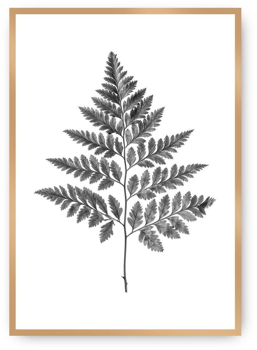 Plakat Fern Grey