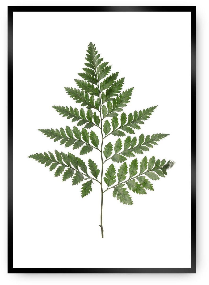 Plakat Fern Green