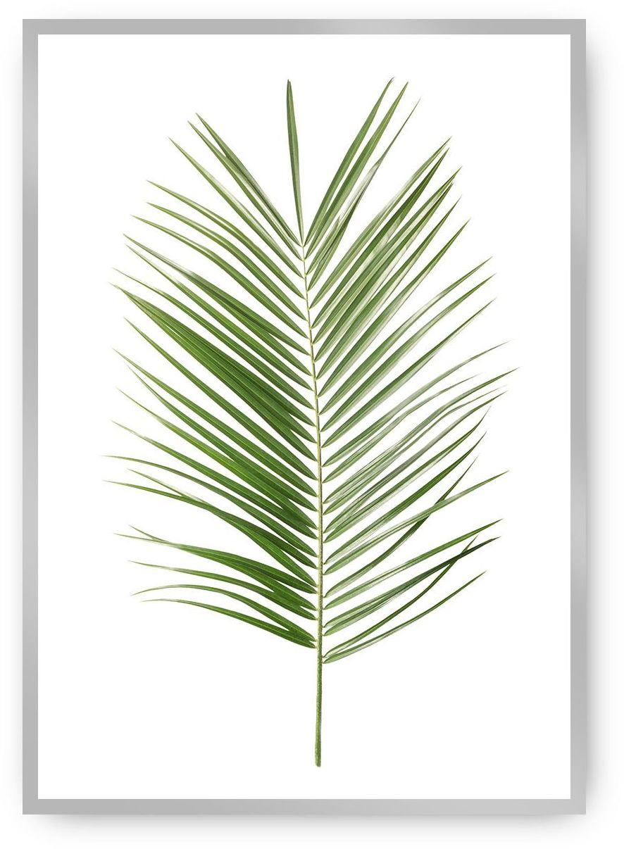 Plakat Palm Leaf Green, 40 x 50 cm, Ramka: Srebrna