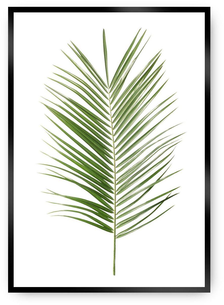 Plakat Palm Leaf Green, 40 x 50 cm, Ramka: Czarna