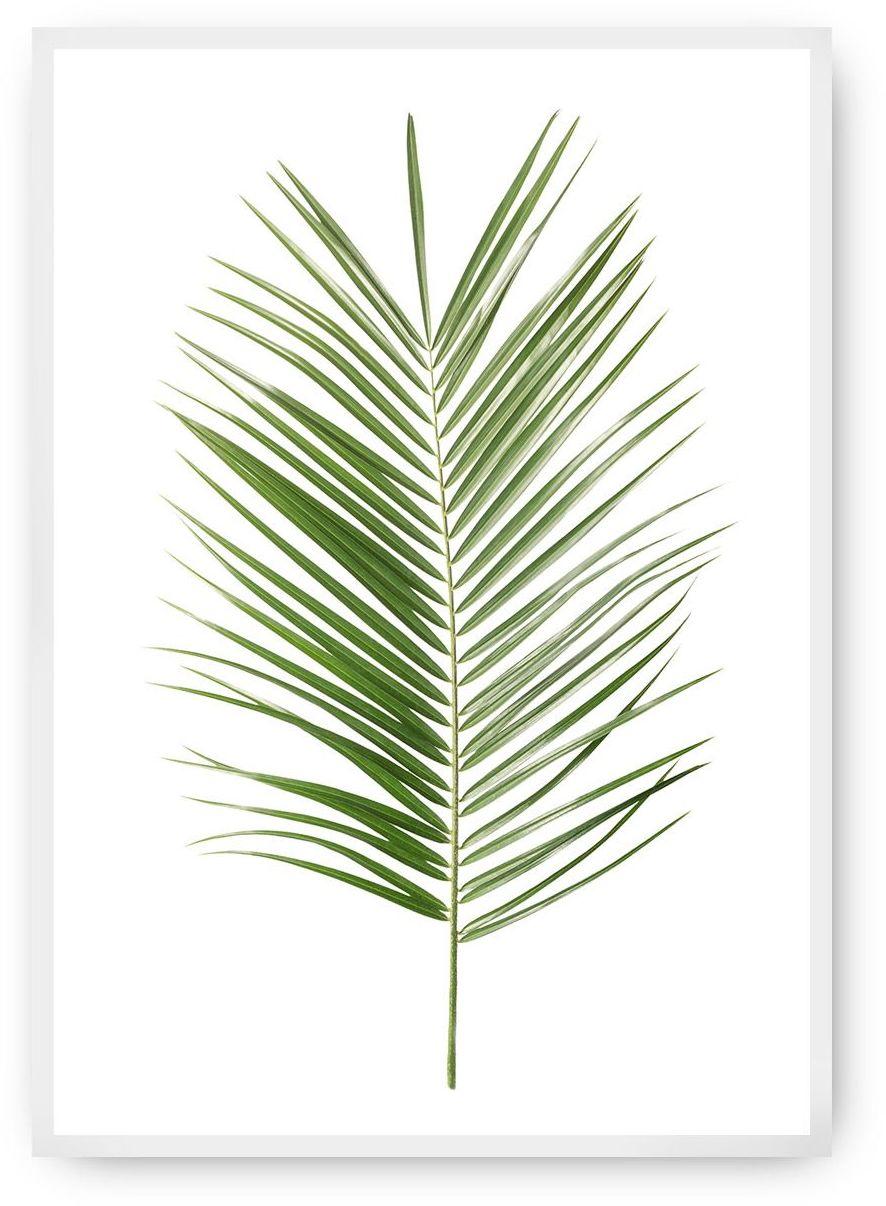 Plakat Palm Leaf Green, 40 x 50 cm, Ramka: Biała