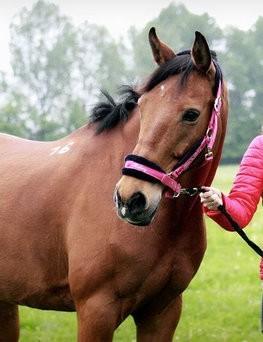 Nauka jazdy konnej dla dwóch osób  Mysłowice
