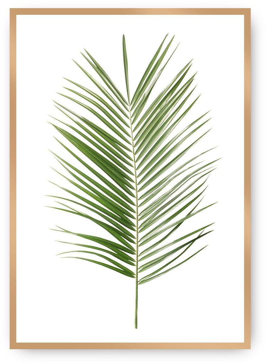 Plakat Palm Leaf Green, 50 x 70 cm, Ramka: Złota