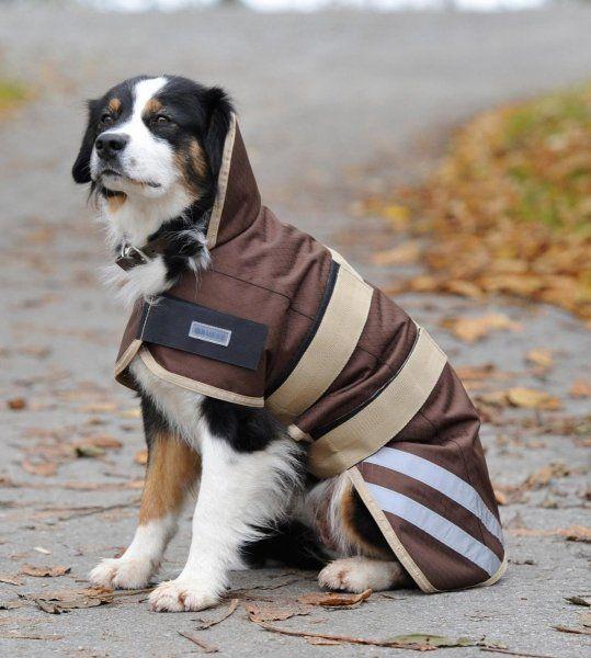 Derka dla psa MOVE - Busse