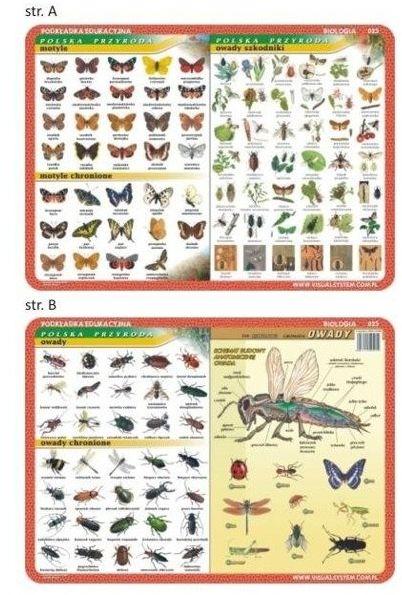 Podkładka edu. 025 - Motyle, owady, anatomia..
