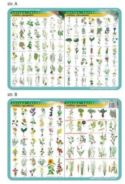 Podkładka edu. 023 -Rośliny pospolite, chronione..