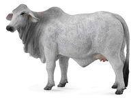Krowa brahman L - Collecta