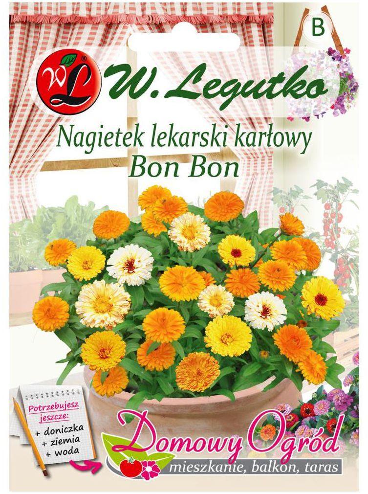 Nagietek lekarski karłowy BON BON nasiona tradycyjne 2 g W. LEGUTKO