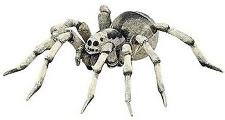 Tarantula - PAPO