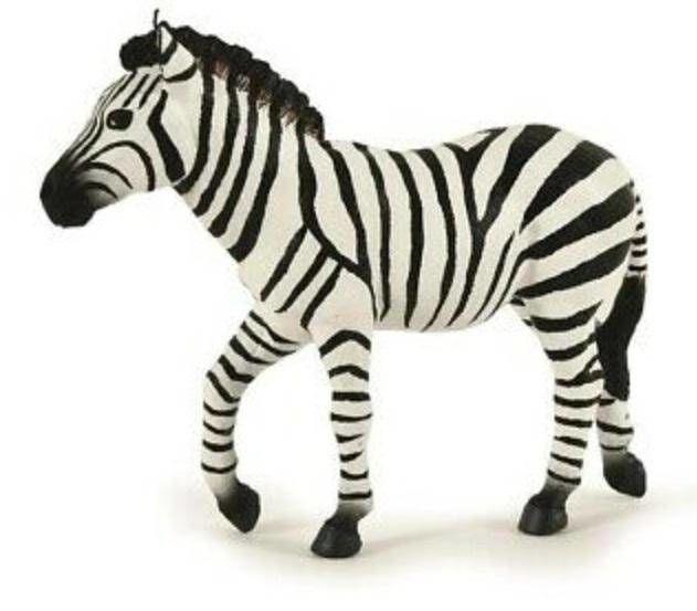 Zebra samiec - PAPO