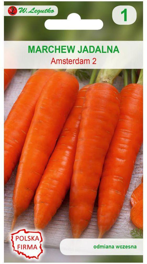 Marchew AMSTERDAM 2 nasiona tradycyjne 5 g W. LEGUTKO