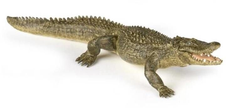 Aligator - PAPO