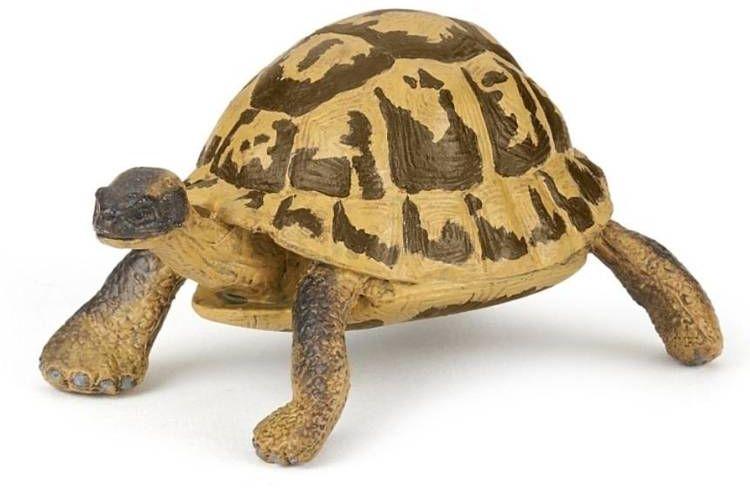 Żółw Hermana - PAPO