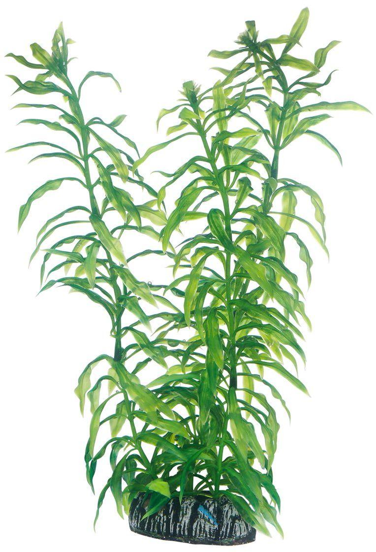 Hobby Roślina Heteranthera