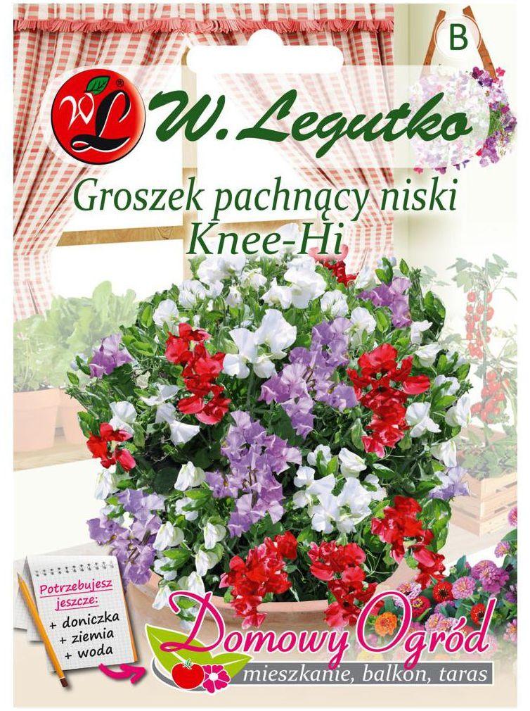 Groszek pachnący niski KNEE - HI nasiona tradycyjne 5 g W. LEGUTKO