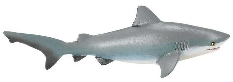 Żarłacz tępogłowy - PAPO