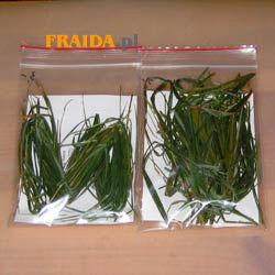 Sweet Grass - cięty