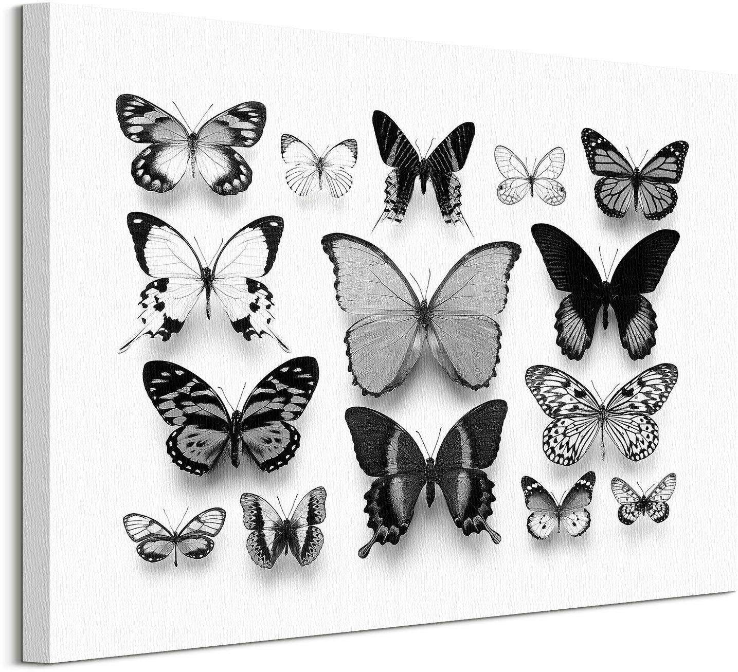 Kolekcja motyli - obraz na płótnie