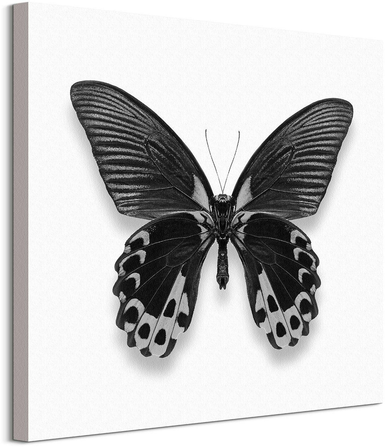 Czarny motyl - obraz na płótnie