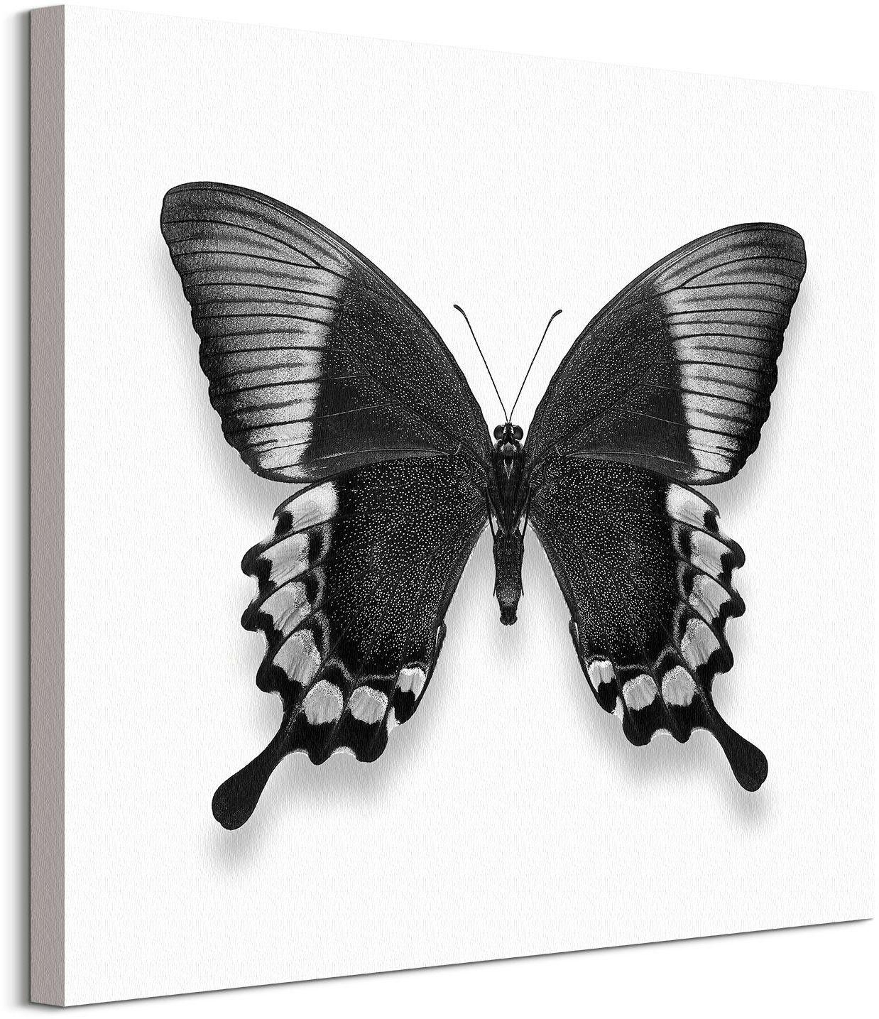 Czarno-biały motyl - obraz na płótnie