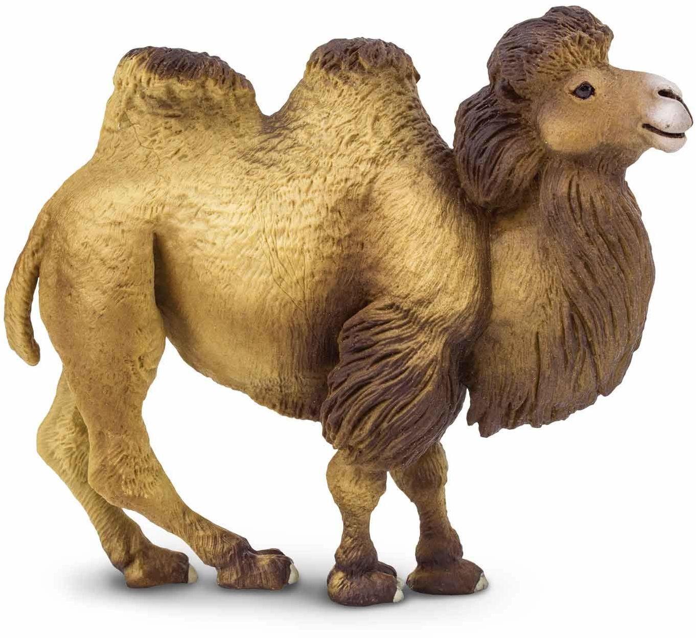 Safari Bactrian Camel