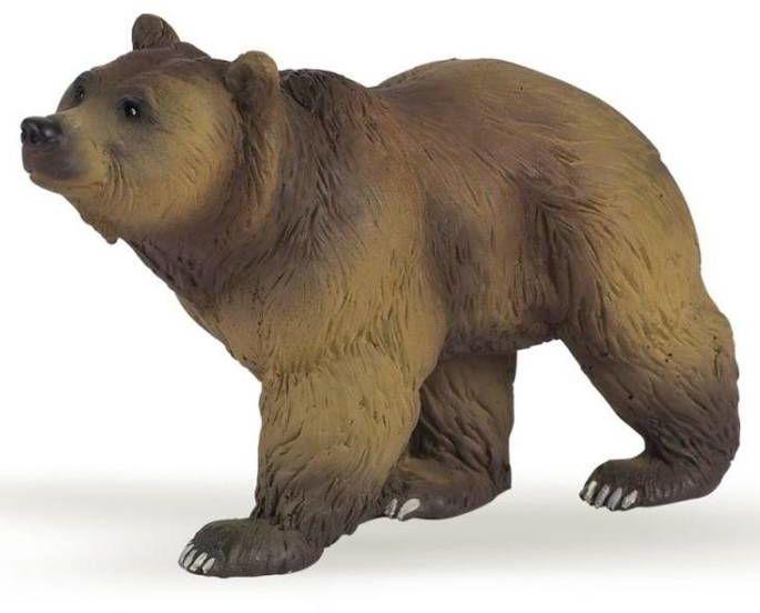 Niedźwiedź pirenejski - PAPO