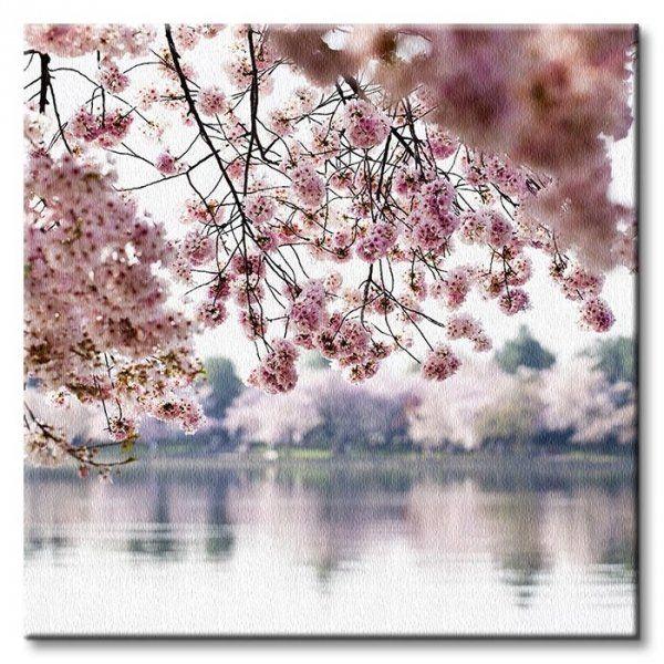 Obraz na Płótnie - Kwiaty wiśni - 40x40cm - Dekoracje Ścienne