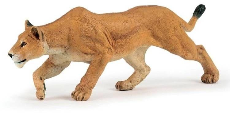 Lwica polująca - PAPO