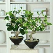 Sztuczne bonsai