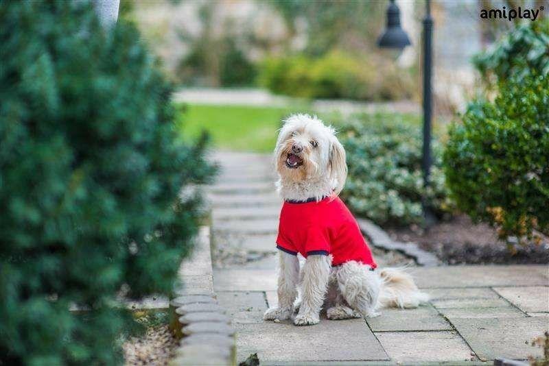Ami Play ubranka dla psów