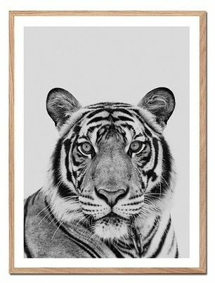 Plakaty tygrys
