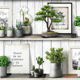 Tapeta kaktusy